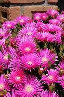 Summer´s flowers