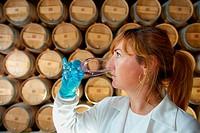 TECNALIA Researchers a sample of wine tasting during the breeding in the barrel cellar, Bodegas Baigorri, Samaniego, Araba, Rioja Alavesa, Basque Coun...
