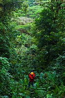 Canopy Trail, Tarzan Swing, Santa Elena Cloud Forest Nature Reserve, Costa Rica, Central America, America.
