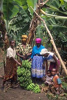Tanzania, Mungushi, Mwangazu Group, TechnoServe project to raise and sell seeds of indigenous vegetables, women and children in home garden with large...