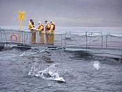 Workers talking at fish farm