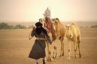 Tuareg man and camels, Sahara Desert, Libya