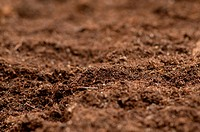 Close up of soil _ can be used as background