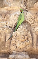 Parakeet and sculptures at the Vaikuntha Perumal Temple, Kancheepuram, Tamil Nadu, India