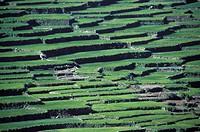 Banaue rice terraces, Luzon Island, Ifugao, Philippines