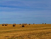Big straw bales on harvested field