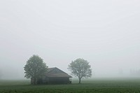 Germany, Bavaria, View of barn and tree in early morning