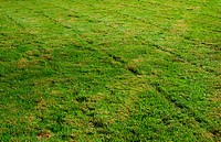 Freshly mowed grass transverse