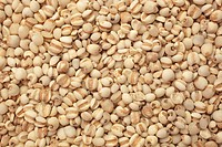 seeds of the medicinal plant Adlay , Adlay millet , Job´s tears , Yi Yi Ren , Coix lachryma_jobi