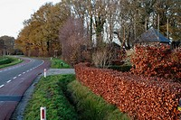Autumn colors along country road, The Netherlands