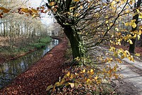 Autumn colors along a stream, The Netherlands