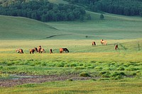 the horses on the grassland