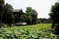the classical lotus pool in Baoding, Hebei Province