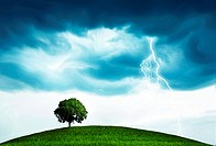 Storm and tree
