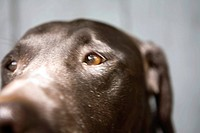 Close_up of Pit Lab Mix