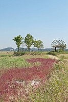 landscape of Sorae ecology park, Nonhyeon, Namdong, Incheon, Korea, Asia