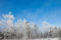 frost covered trees in Kawayu Onsen, Teshikaga, Kawakami, Hokkaido, Japan