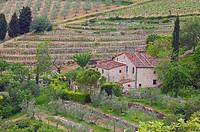 Radda in Chianti, Chianti, Tuscany landscape, Siena Province, Tuscany, Italy