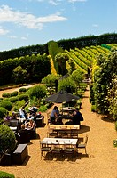 Mudbrick Vineyard, Oneroa, Waiheke Island, Hauraki Gulf, near Auckland, New Zealand