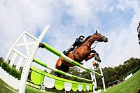 Horseback Rider Jumping Hurdle