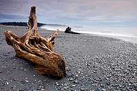 Driftwood on Gillespies Beach, West Coast, South Island, New Zealand, Pacific