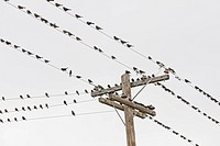 Birds perched on wires