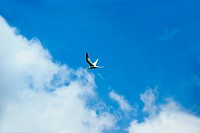 Blue sky. Clouds. flying Birds