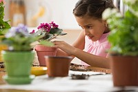 Hispanic girl planting flowers in pots