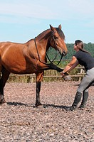 Physiotherapy for Horses / stretching