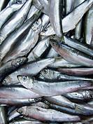 Clupeonella fish