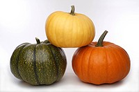 Three pumpkins on white background