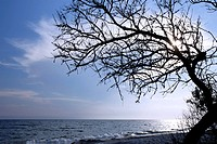 Dry tree above the sea