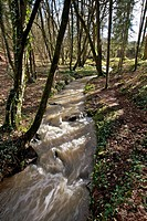 passage of the torrent instead said, mill case, broceliande, Ille et Vilaine, Brittany, France