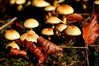 Closeup of wild mushrooms in the forest