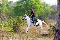 Brazil, Mato Grosso, Pantanal area, Horse in a fazenda.