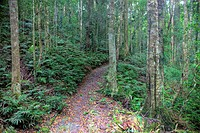 Trail in rainforest of Lamington N.P.