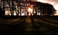 Winter sunrise through leafless beech trees, casting shadows
