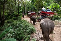 Tourists ride elephants at Sai Yok Elephant Village, near Kanchanaburi, Thailand