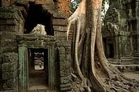 Mighty kapok tree at Ta Prohm, Preah Khan, Angkor, Cambodia, Asia