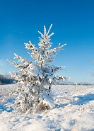 Frost covered christmas tree