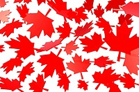 canadian maple leafs autumn leaves, flag symbol 3d illustration