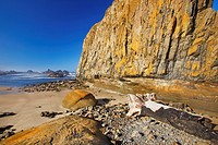 low tide at seal rock state recreation site, oregon united states of america