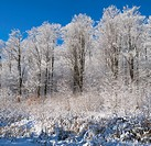 snow covered maple trees, iron hill quebec canada