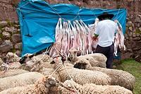 Peru, Cuzco province, Inca Sacred Valley, San Ilario, cattle market, sheep market