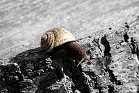 Live snail on a wall