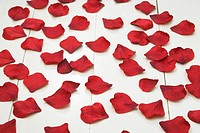 Fake Red Fabric Rose petals on white wooden floorboards