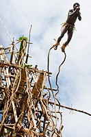 Vanuatu, Penama Province, Pentecost Island, Lonorore, Naghol, traditional land diving, rite of passage from childhood to adulthood, man jumping into s...