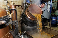 France, Haut Rhin, Ribeauville, distillery Jean Paul Mette, distillation, eau de vie of mirabelle, drain the still, fall