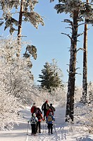 France, Haut Rhin, Hautes Vosges, The Lac Blanc, Col du Calvaire, walkers in snowshoes, forest, snow, winter