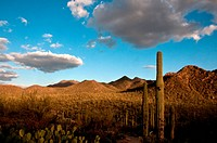 Saguaro National Park, Sonoran Desert, Arizona.